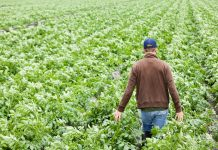 """Με """"υβριδικό"""" σύστημα ο υπολογισμός εισφορών των αγροτών το 2017"""