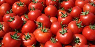 Μεσσηνία: «Βουτιά» της υπαίθριας ντομάτας