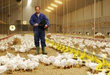 Οι παράγοντες που καθορίζουν την πορεία της πτηνοτροφίας