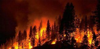 Ενισχύθηκαν οι δασικές πυρκαγιές στο βόρειο τμήμα της Πορτογαλίας