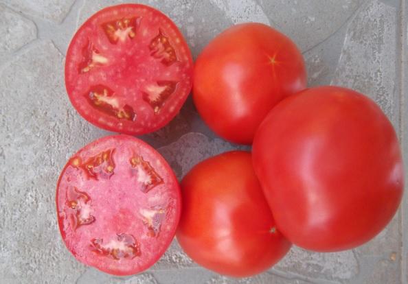 Σε γκρίζο φόντο οι νόστιμες ντομάτες Γουλεμίου Φθιώτιδας