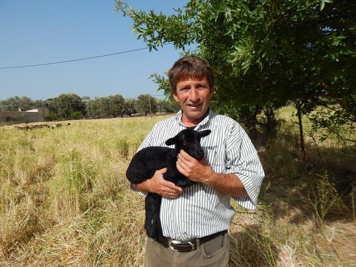 Λισβόρι Λέσβος, κτηνοτροφία
