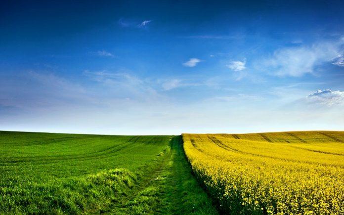 Η βιολογική γεωργία μπορεί να κάνει τα υποβαθμισμένα εδάφη γόνιμα