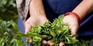 Bιολογική καλλιέργεια: Μέθοδοι για αποκατάσταση της μειωμένης στρεμματικής απόδοσης