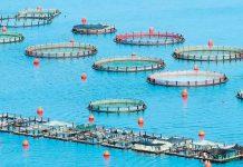 Αδειοδότηση εγκατάστασης νέων μονάδων ιχθυοκαλλιέργειας και παραγωγής ρεύματος στον Κορινθιακό