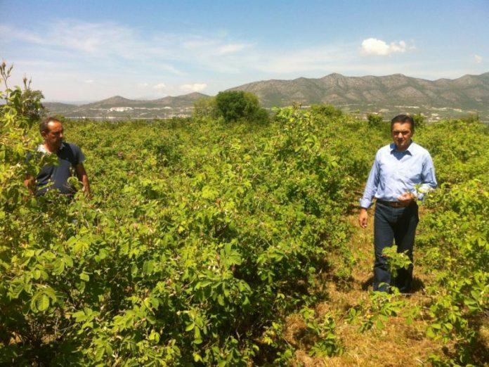 Περιοδεία Τομεάρχη Αγροτικού της ΝΔ στο νομό Λάρισας