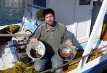 Η δραστική μείωση των ψαριών οδηγεί σε αδιέξοδο και τον κλάδο των αλιέων