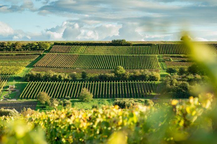 Ανάκαμψη του αγροτικού τομέα στην Ιταλία