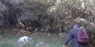 Αναζητούν τρούφα στο Οροπέδιο Λασιθίου