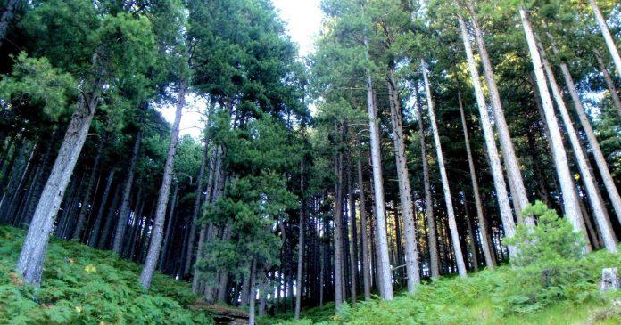 ΓΕΩΤΕΕ: Στη σωστή κατεύθυνση το νομοσχέδιο για τους δασικούς συνεταιρισμούς