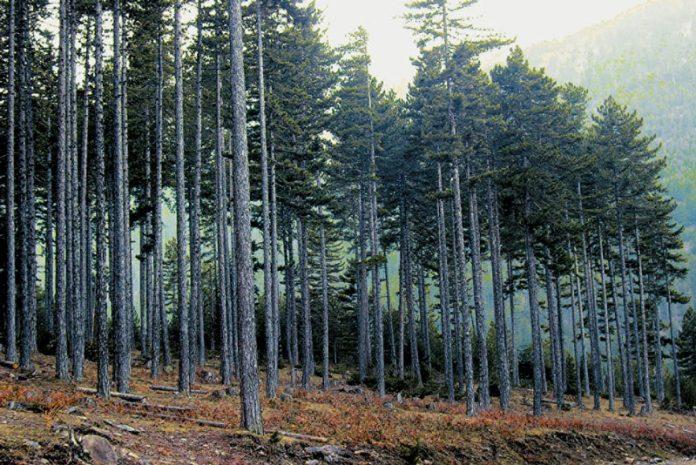 Στα 21 τα μέλη για τη συγκρότηση δασικών συνεταιρισμών