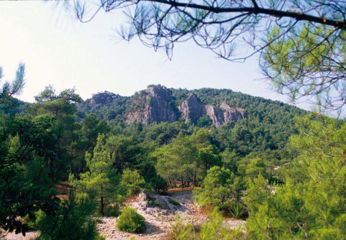Στην ανάρτηση του δασικού χάρτη της δημοτικής κοινότητας Αλεξανδρούπολης προχώρησε η Διεύθυνση Δασών Έβρου