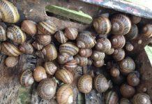 Δυτ. Ελλάδα: Αβοήθητοι οι εκτροφείς σαλιγκαριών παλεύουν κόντρα στο ρεύμα να επιβιώσουν