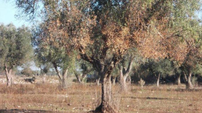 ΣΕΔΗΚ: Εκτός ΕΛΓΑ και ΠΣΕΑ οι αποζημιώσεις των ελαιοπαραγωγών της Κρήτης