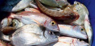 Ένα στα πέντε ψάρια δεν είναι αυτό που νομίζουν ότι αγοράζουν οι καταναλωτές