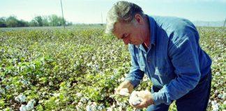 Φθιώτιδα: Στα σκαριά η ομάδα παραγωγών βαμβακιού