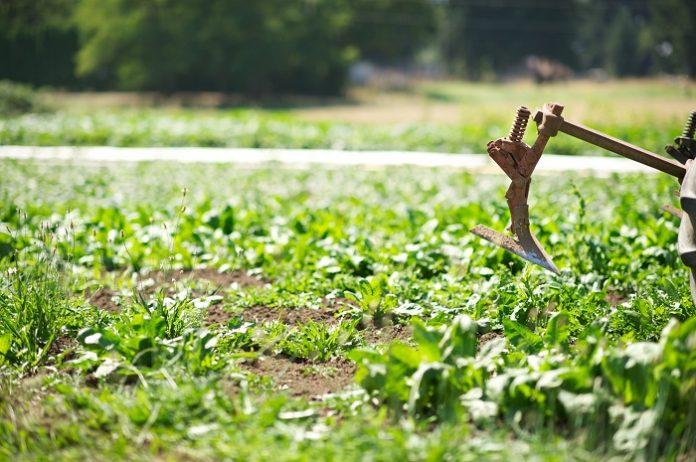 Η πράσινη γεωργία στα χέρια των αγροτών