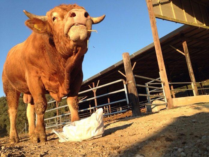 Ηλεκτρονική πλατφόρμα για την αδειοδότηση των στάβλων προβλέπει το ν/σ για τις κτηνοτροφικές εγκαταστάσεις που τέθηκε σε διαβούλευση έως 17/9