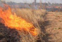 Θεσσαλονίκη: Έκκληση στους καλλιεργητές να τηρήσουν την απαγόρευση καύσης γεωργικών υπολειμμάτων