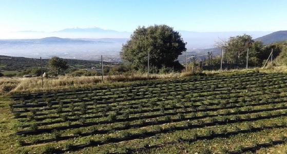 Κεντρική Μακεδονία: Καλλιέργειες με μεράκι και… ΠΕΡΙσυλλογή