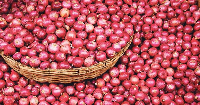 Μειωμένες οι καλλιεργούμενες εκτάσεις κρεμμυδιού στη Θήβα