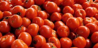 Ντομάτα: Σχεδόν μισός αιώνας ποιότητας στους Στρόπωνες Εύβοιας