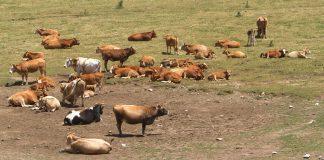 Εναλλακτικούς τρόπους για τον περιορισμό των αντιβιοτικών στα ζώα αναζητούν οι επιστήμονες