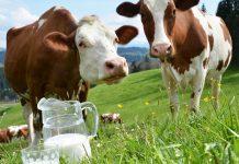 Διευκρινήσεις ΕΛΓΟ για την υπόθεση της κτηνοτροφικής επιχείρησης με τις δυσανάλογες ποσότητες γάλακτος