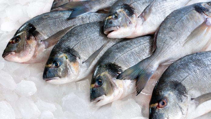 Πρωταγωνιστές στις εξαγωγές τα ελληνικά ψάρια