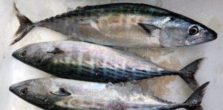 Ένα ψάρι που συνδέει την ιστορία του με την Ιερισσό