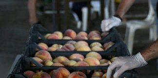Έρχεται ρύθμιση κατά της «μαύρης» διακίνησης αγροτικών προϊόντων