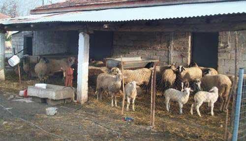 Ημίμετρο χαρακτηρίζει η ΠΕΚ την παράταση για τις κτηνοτροφικές άδειες