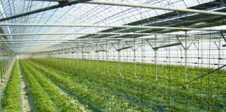 Ρώσοι επενδυτές από άλλους κλάδους στρέφονται στις θερμοκηπιακές καλλιέργειες