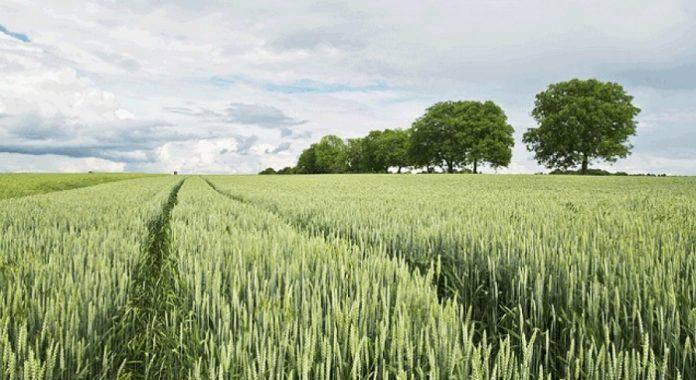 Ευρώπη δύο ταχυτήτων στον αγροτικό τομέα, ο νότος σπέρνει ο βορράς θερίζει