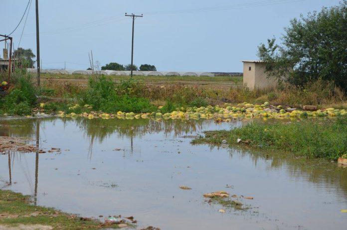 Ν. Μωραΐτης: «Πουλάτε στους αγρότες, φύκια για μεταξωτές κορδέλες»