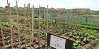 Αγρότες κατά συνείδηση στον Βιοαγρό του Δήμου Αλεξανδρούπολης