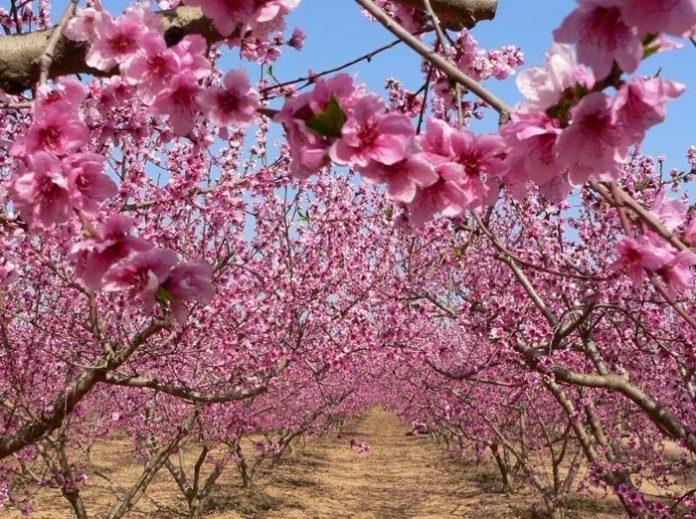 Ημερίδα για τις καλλιέργειες καρυδιάς, αμυγδαλιάς και μηλιάς στις Σέρρες