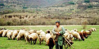 Δωρεάν ζωοτροφές για 100 μέρες στους κτηνοτρόφους της Θάσου