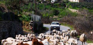 Ανακοίνωση ΟΠΕΚΕΠΕ για την ετήσια απογραφή του ζωικού κεφαλαίου των εκμεταλλεύσεων αιγοπροβάτων
