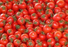 Δέσμευση 2,7 τόνων ντομάτας χωρίς ταυτότητα