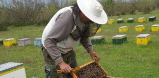 Ενημέρωση των μελισσοκόμων από την ΔΑΟΚ Αργολίδας