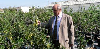 Μ. Μπόλαρης: Πρόκληση η ανάδειξη της πολυποικιλότητας των ελληνικών ελαιοδέντρων