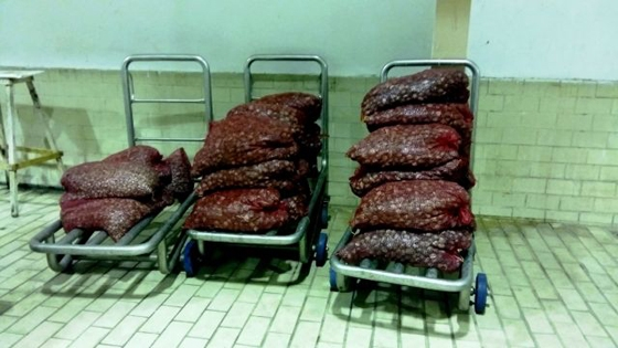 Αλεξανδρούπολη: 659 κιλά όστρακα ακατάλληλα για κατανάλωση