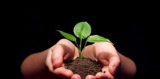 Ημερίδα του ΕΛΓΟ για το πολλαπλαστιαστικό υλικό την Παρασκευή 14/12 στη Νάουσα