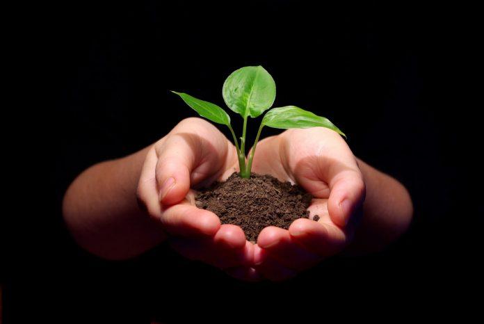 Συνάντηση Κόκκαλη φυτωριούχων για το πολλαπλασιαστικό υλικό