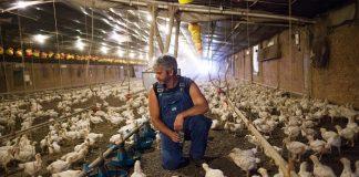 Έκκληση πτηνοτρόφων να μπουν τα εγγυημένα από το Δημόσιο δάνεια στον εξωδικαστικό