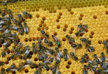 Το καλύτερο μέλι είναι της… μέλισσας
