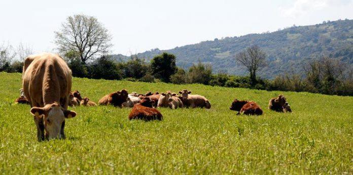 Οι πληρωμές για το 2ο έτος βιολογικής κτηνοτροφίας