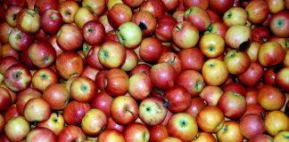 2% μειωμένη εκτιμάται η παραγωγή μήλων στην Ε.Ε. το 2016-2017