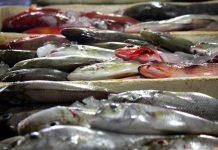 Το ελληνικό τμήμα του Παγκόσμιου Ταμείου για τη φύση καλεί τους καταναλωτές σε υπεύθυνη επιλογή ψαρικών